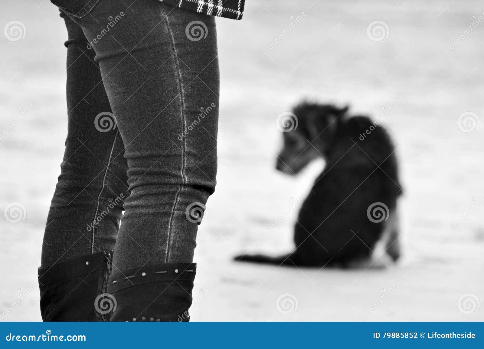 Abstrakcjonistyczna tła pojęcia żalu straty śmierć zwierzę domowe pies