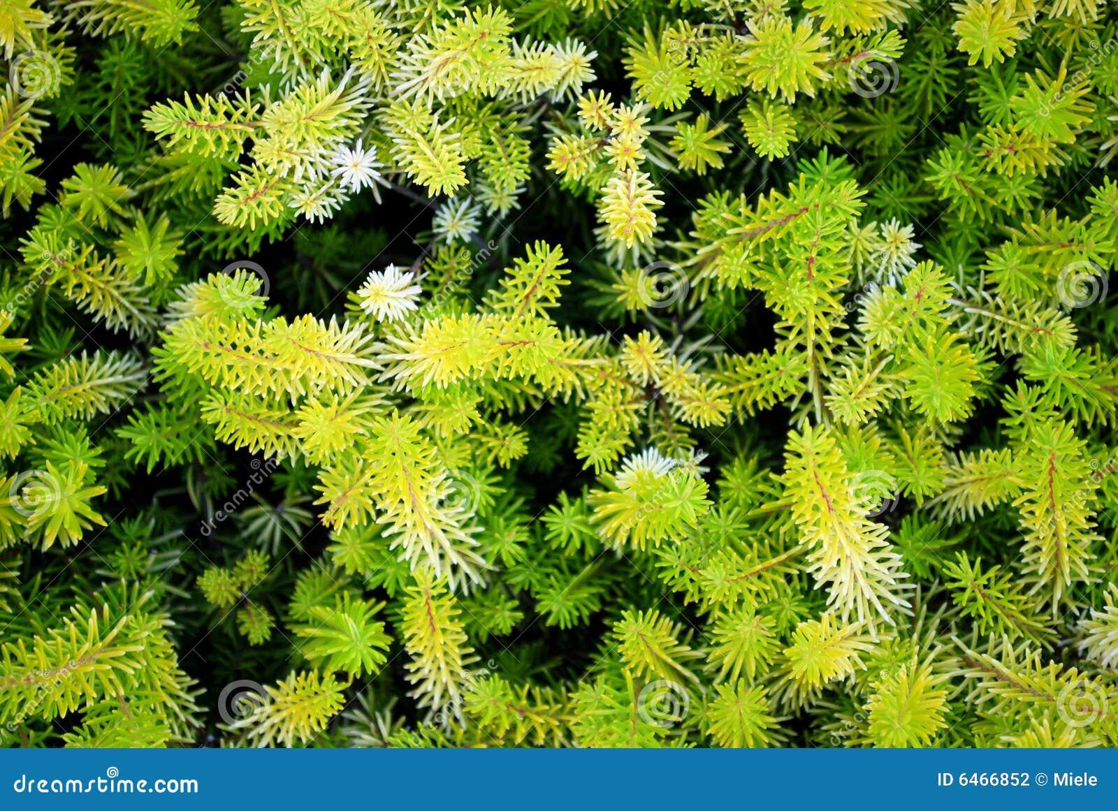 Abstrakcjonistycznego zielona fractal roślinnych