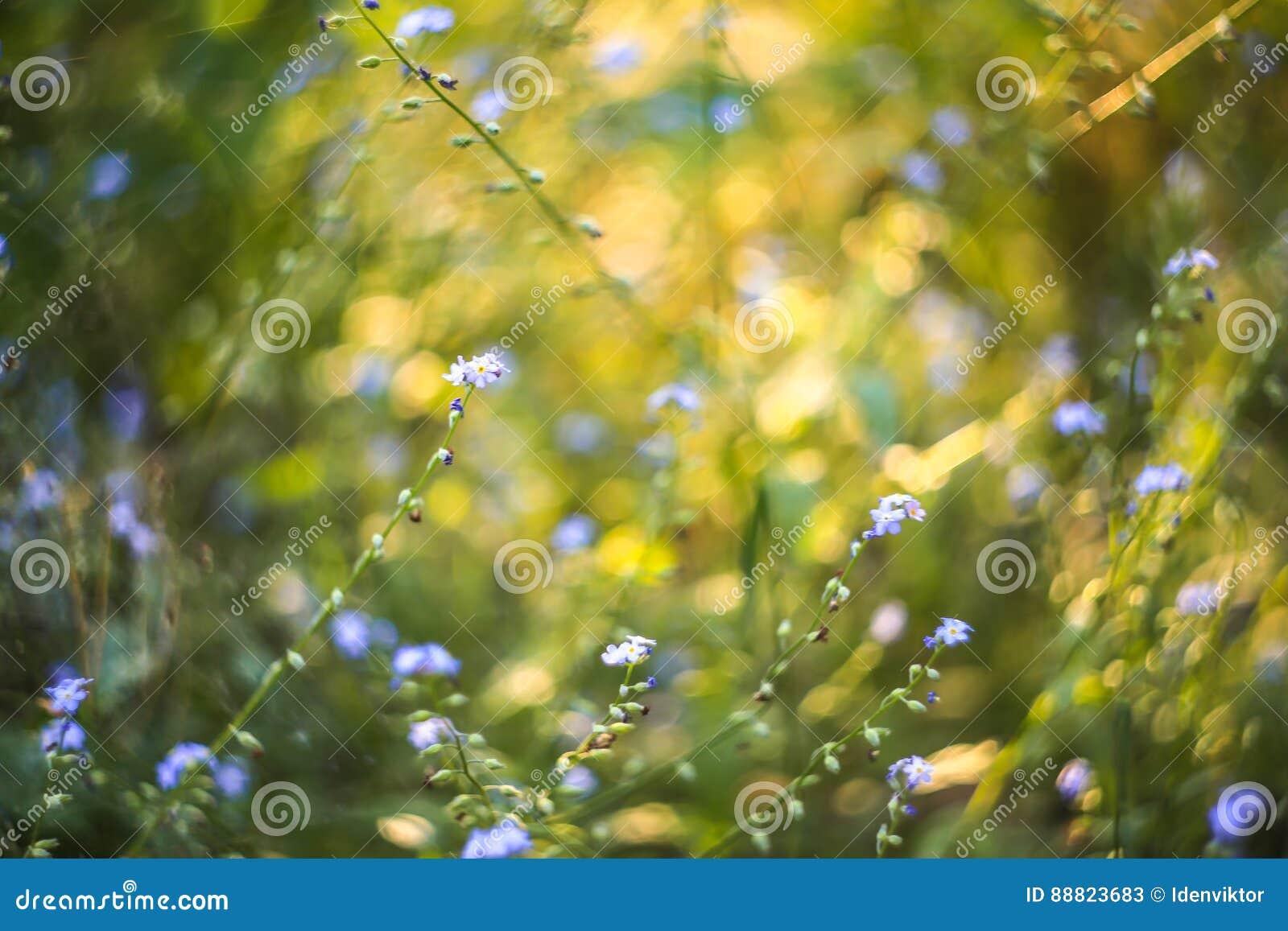 Abstrakcjonistyczny jaskrawy zamazany tło z wiosną i latem z małym błękitem kwitnie i rośliny Z pięknym bokeh w świetle słoneczny