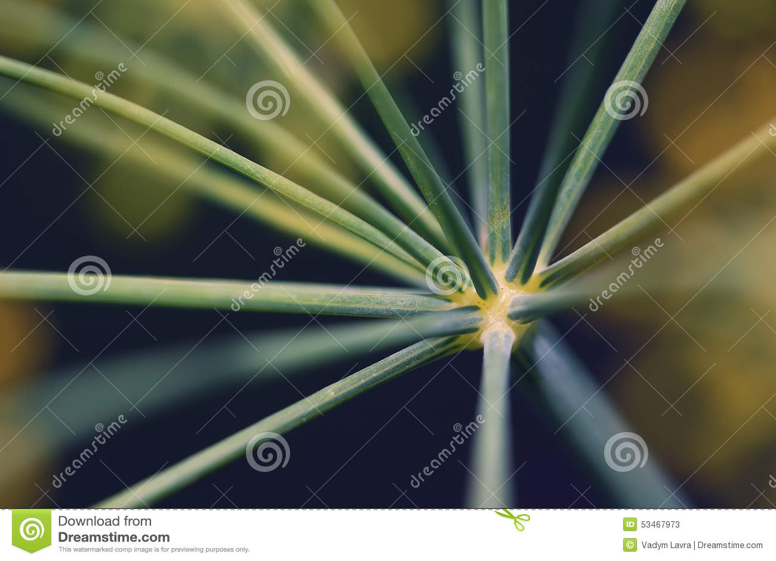 Abstrakcjonistyczny kwiatostanu koperu zakończenie