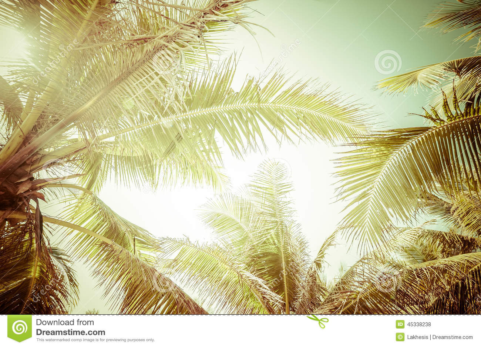 Abstrakcjonistyczny lata tło z tropikalnymi drzewko palmowe liśćmi