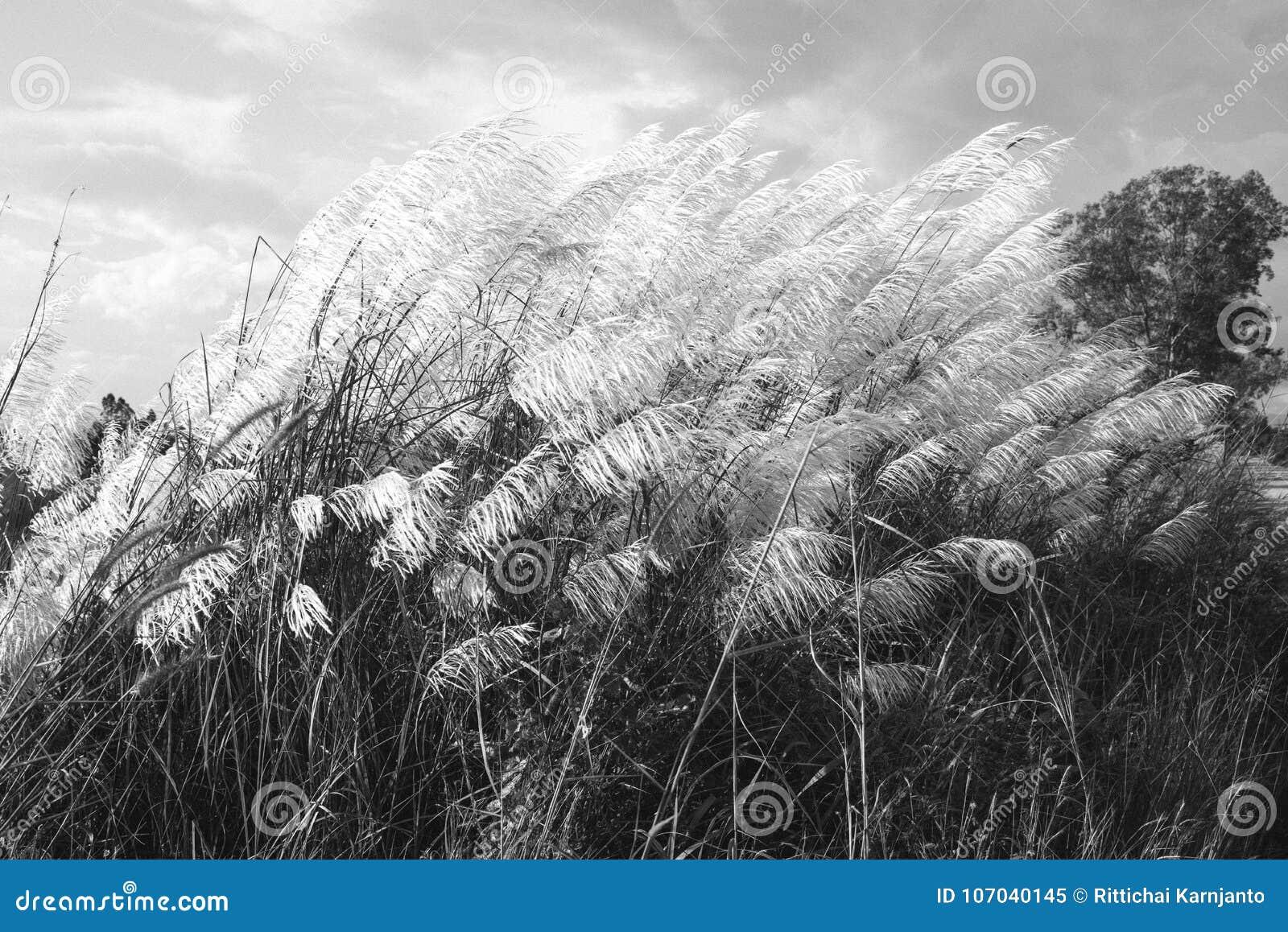 Abstrakcjonistyczny natury tło kwiaty w lecie i wiośnie