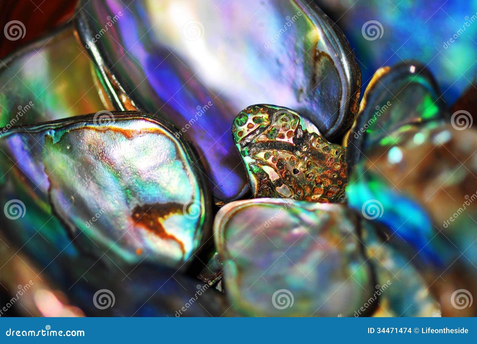 Abstrakcjonistyczny paua łuska tło jaskrawego żywego kolor