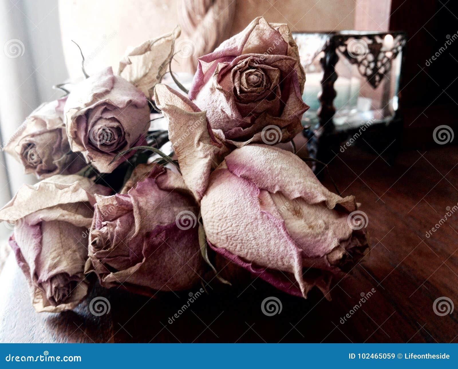 Abstrakcjonistyczny wiązka nieboszczyk suszył różową róży pojęcia śmierć, strata, żal