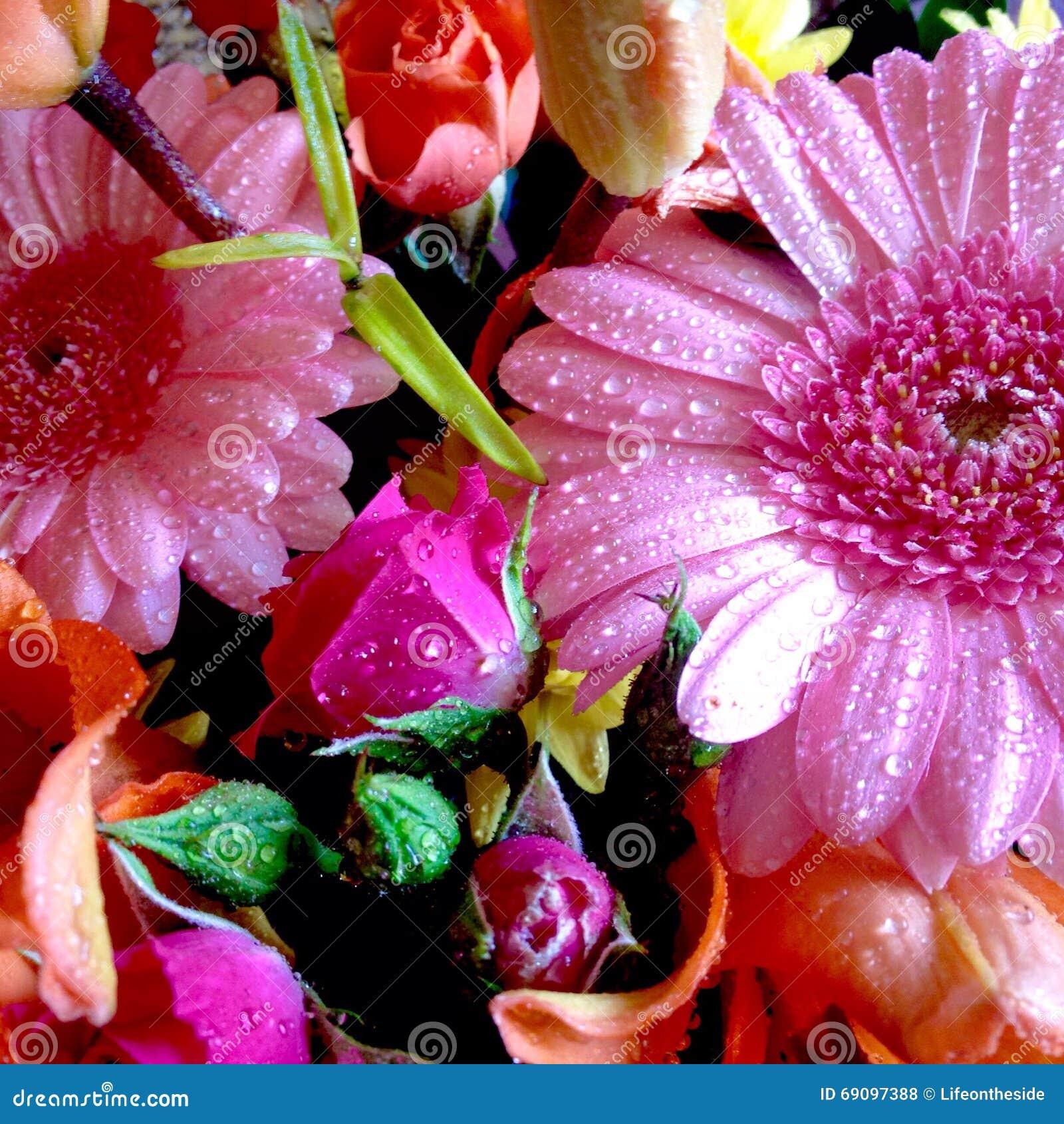 Abstrakcjonistycznych kolorów tła wiosny bukieta menchii kolorowa pomarańcze kwitnie