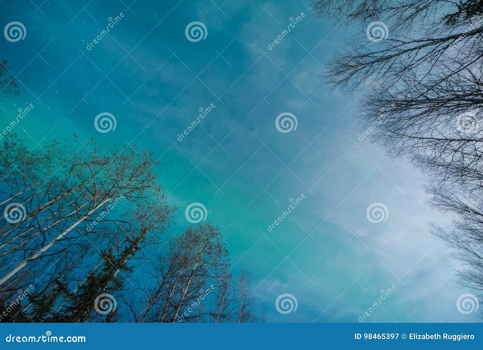 Abstrakt begrepp av det gröna norrskenet och silhouetted träd för vit björk