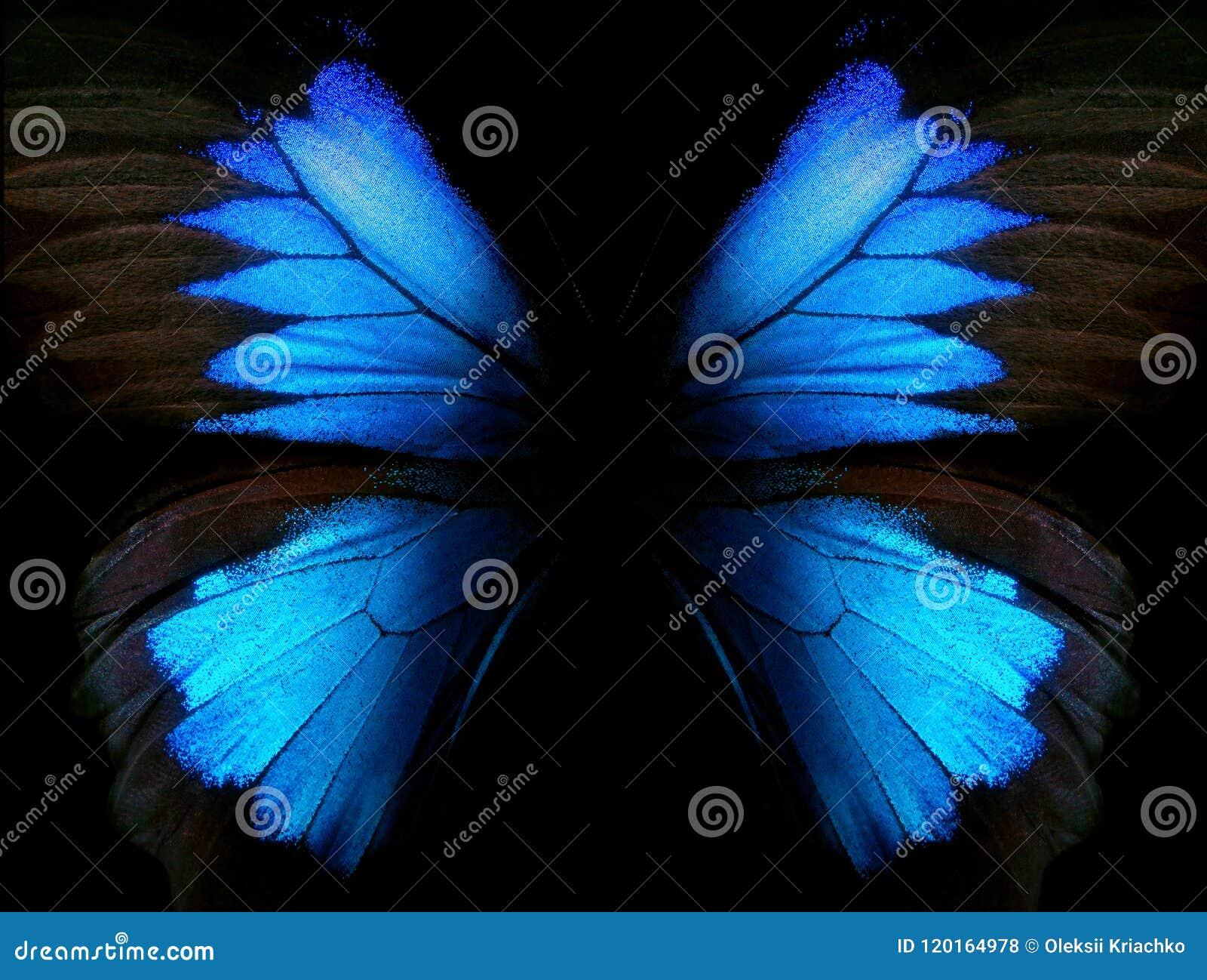 Abstrakt blå modell Vingar av fjärilen Ulysses closeup Vingar av en fjärilstexturbakgrund