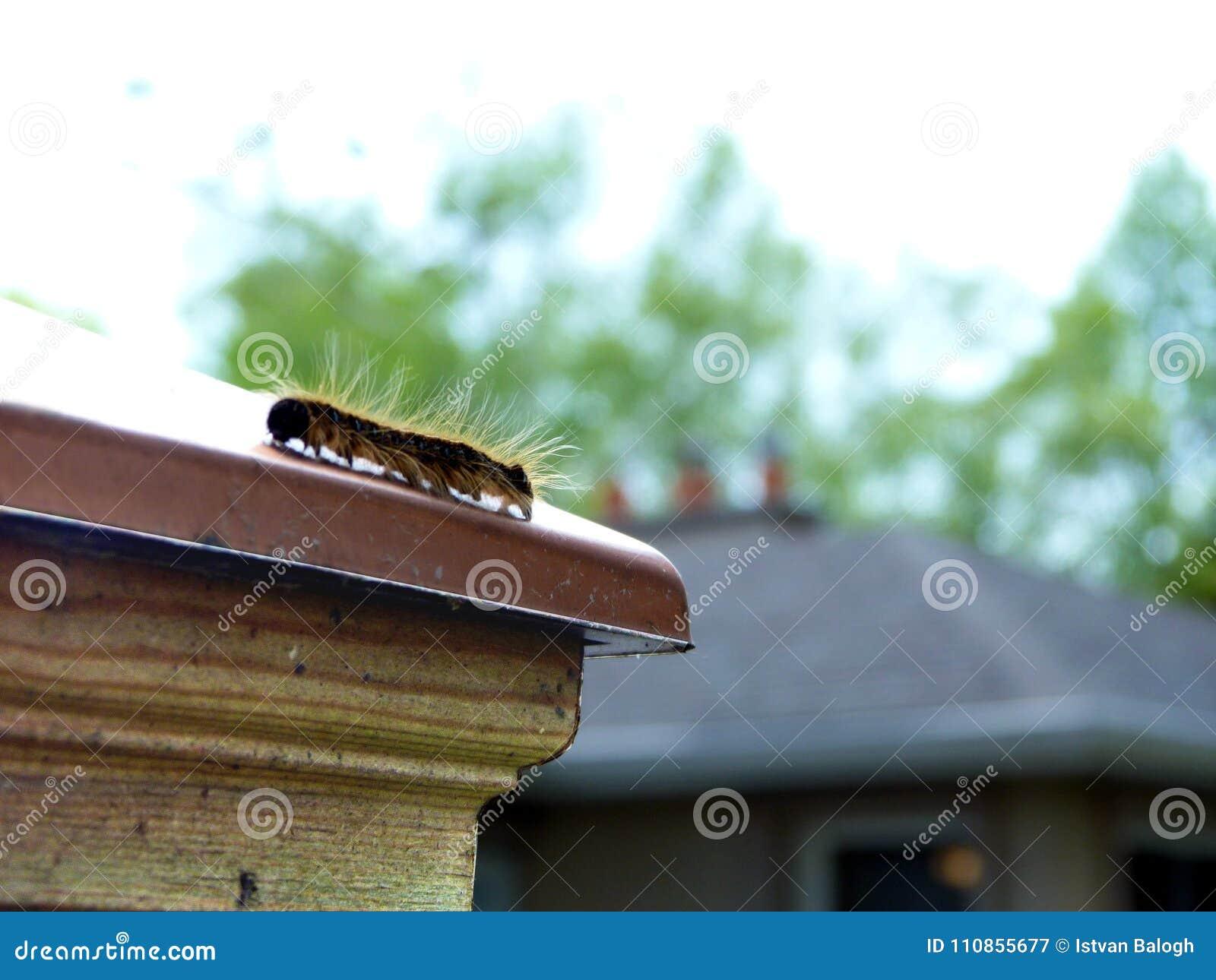Abstrakt Caterpillar na Miedzianej Płotowej nakrętce