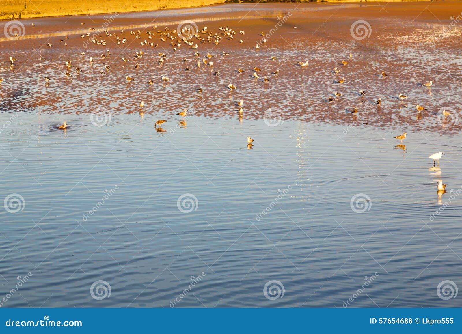 Abstrakt   denna Africa oceanu fala i ptak