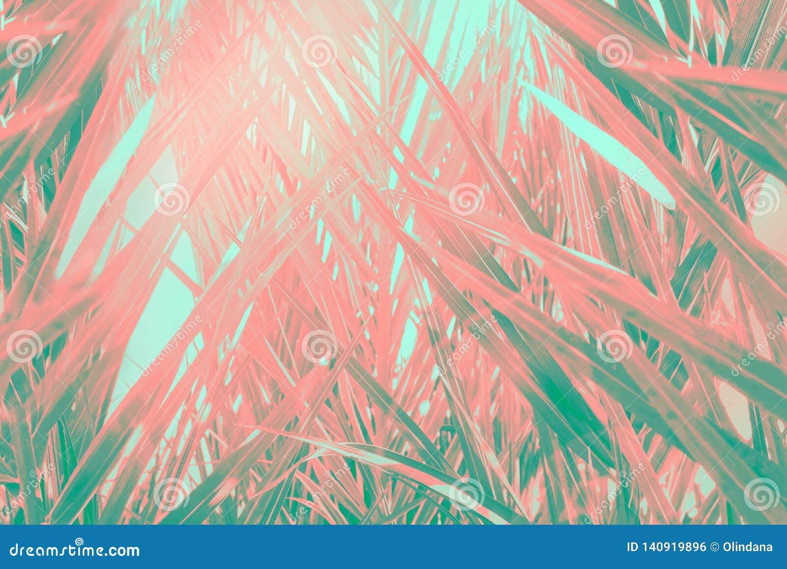 Abstrakt futuristisk tropisk bakgrund Småskog av palmträd med den långa dingla spetsiga sidamodellen Rosa lutning för grön kricka