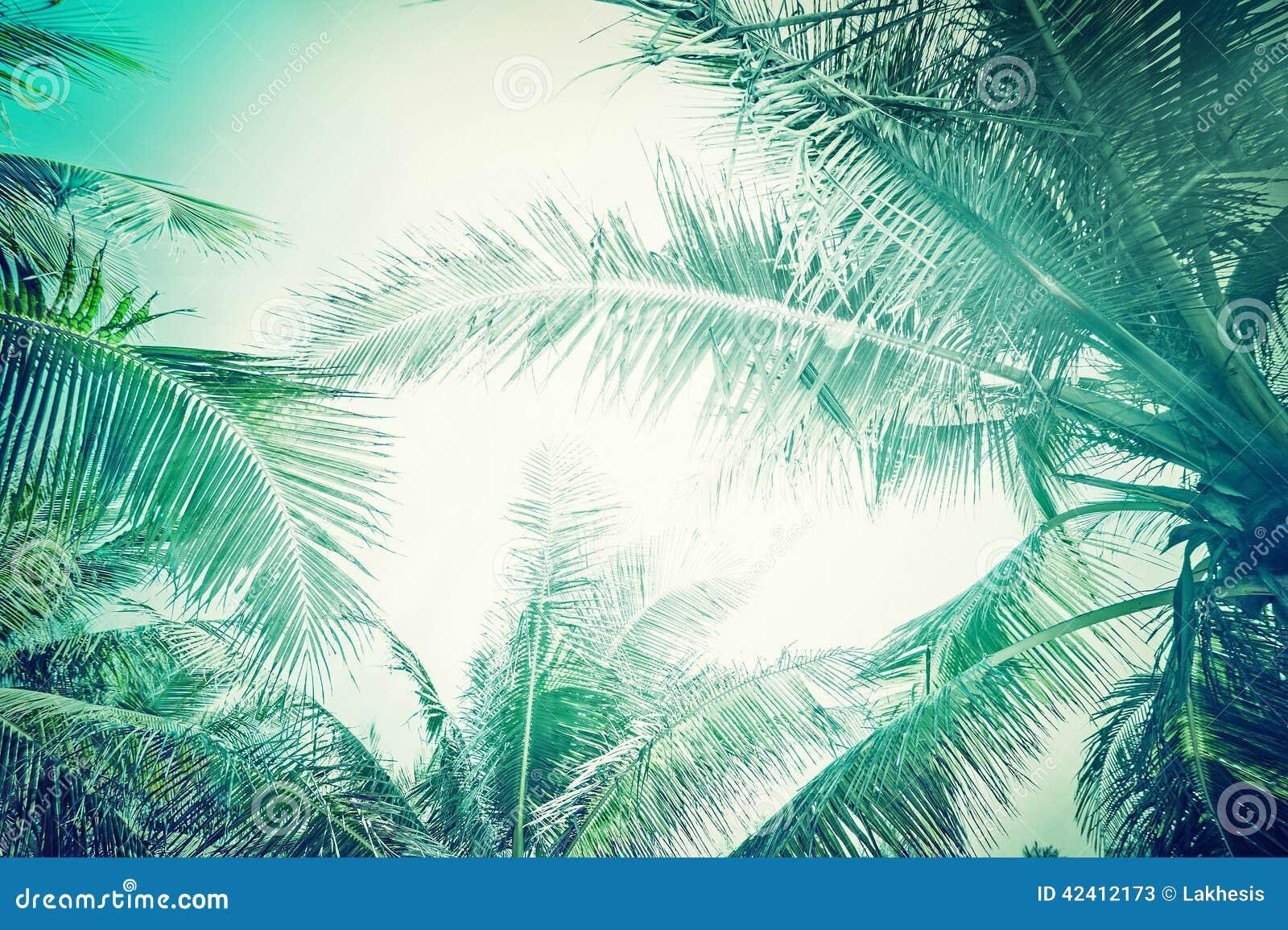 Abstrakt sommarbakgrund med den tropiska palmträdet