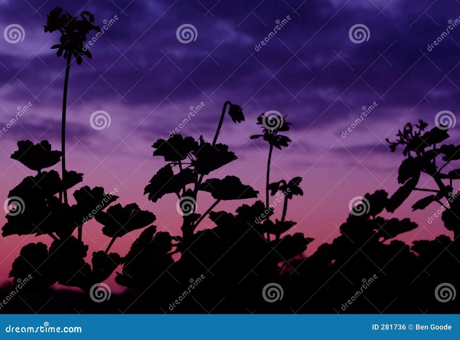 Abstrakt växtsilhouette