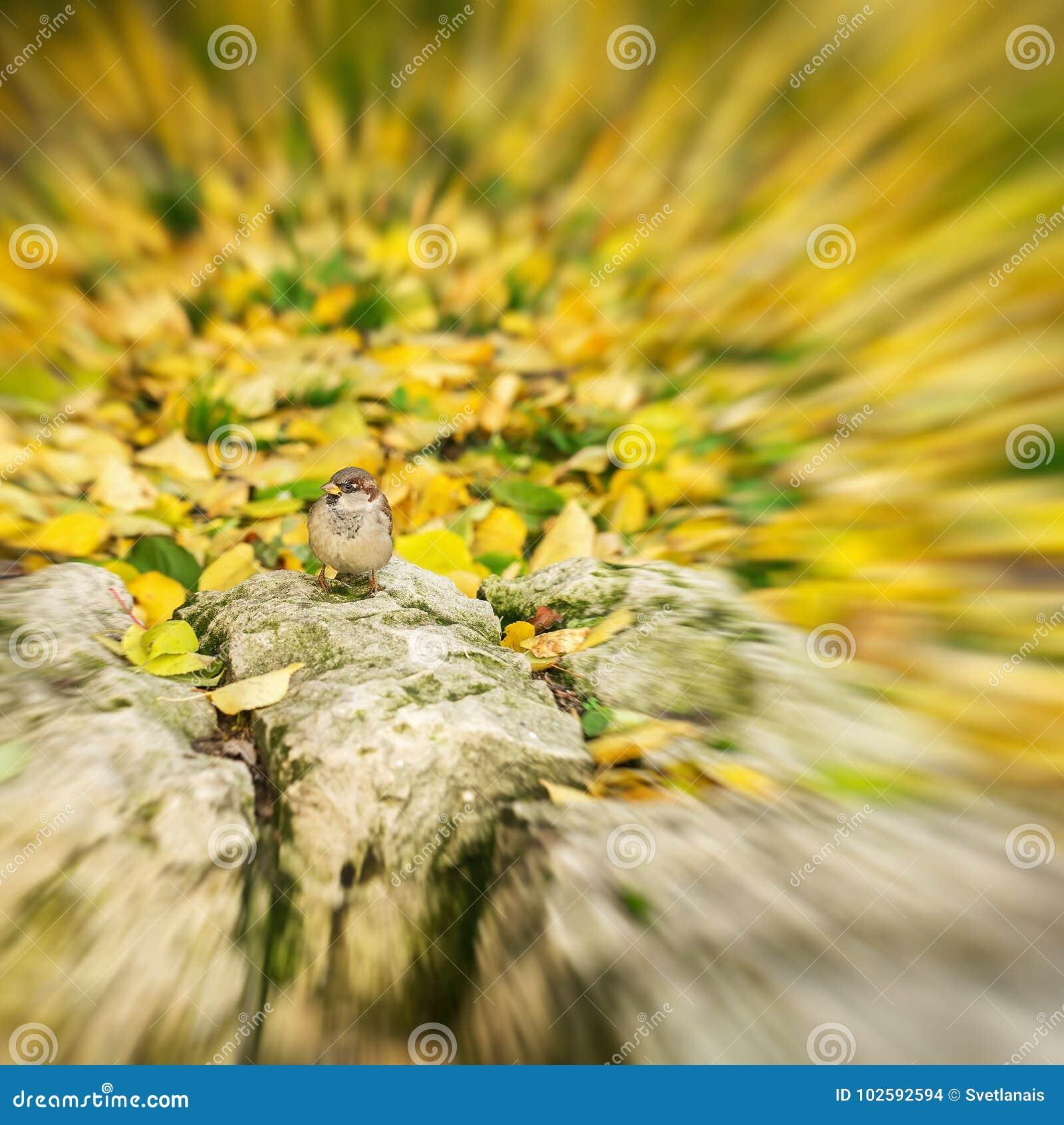 Abstrakt zamazujący jesieni tło w złotych kolorach, mały ptak, wróbel wygrzewa się w słońcu sezony