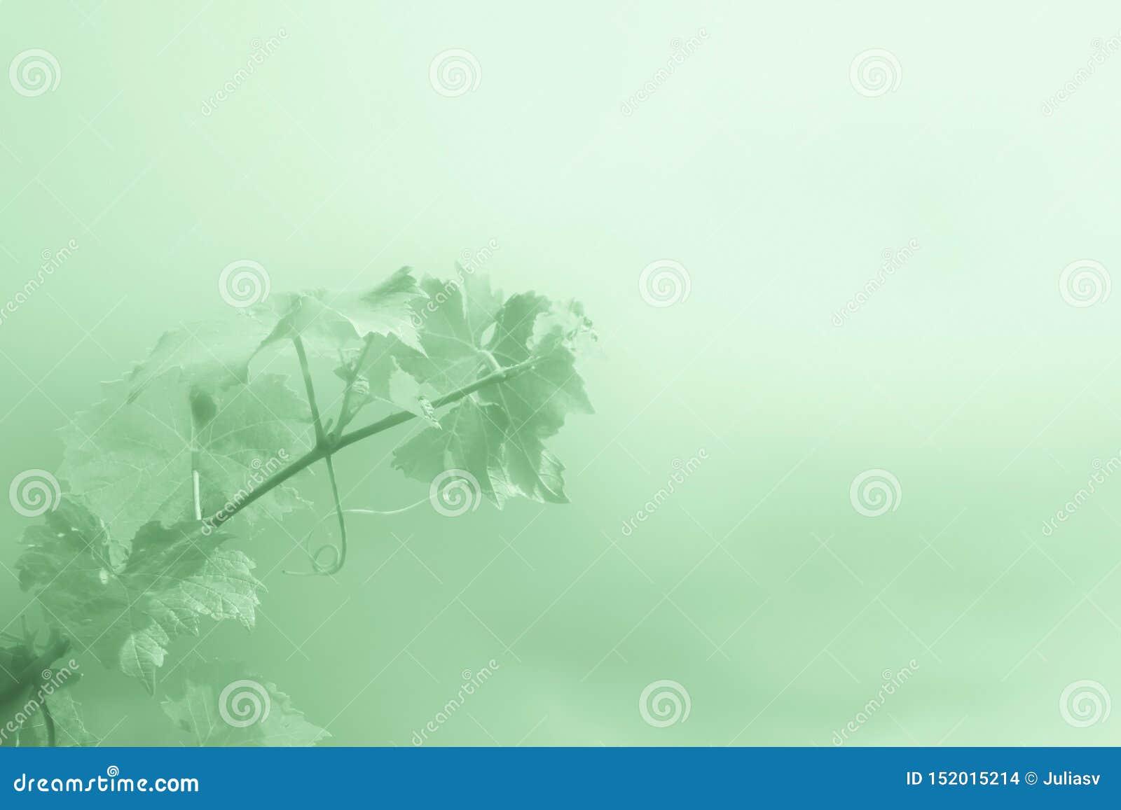 Abstrakta zielony tło z gałąź winogrona