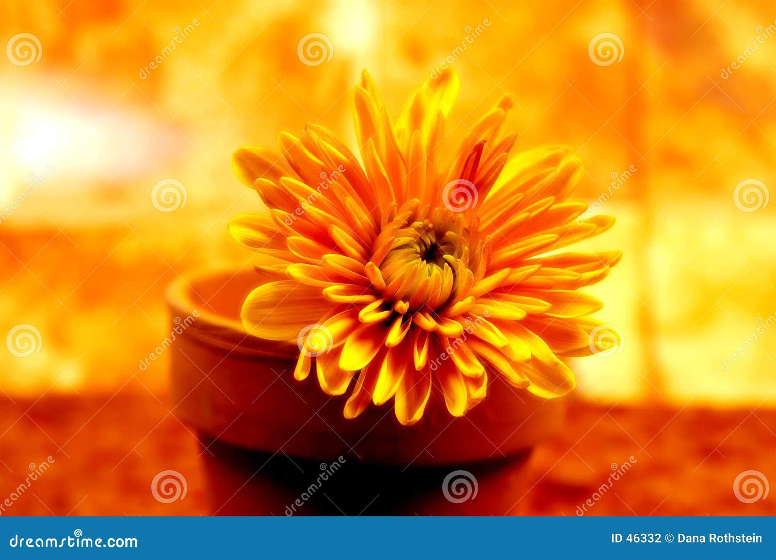 Abstrakte eingemachte Blume 3