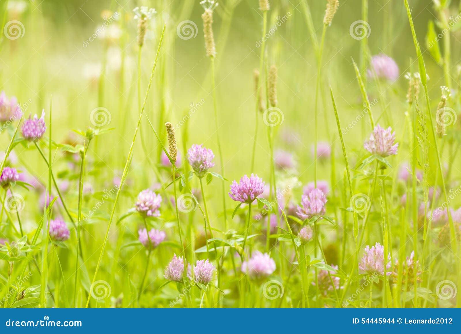 Abstrakte Natur blüht Hintergrundfeder und -sommer