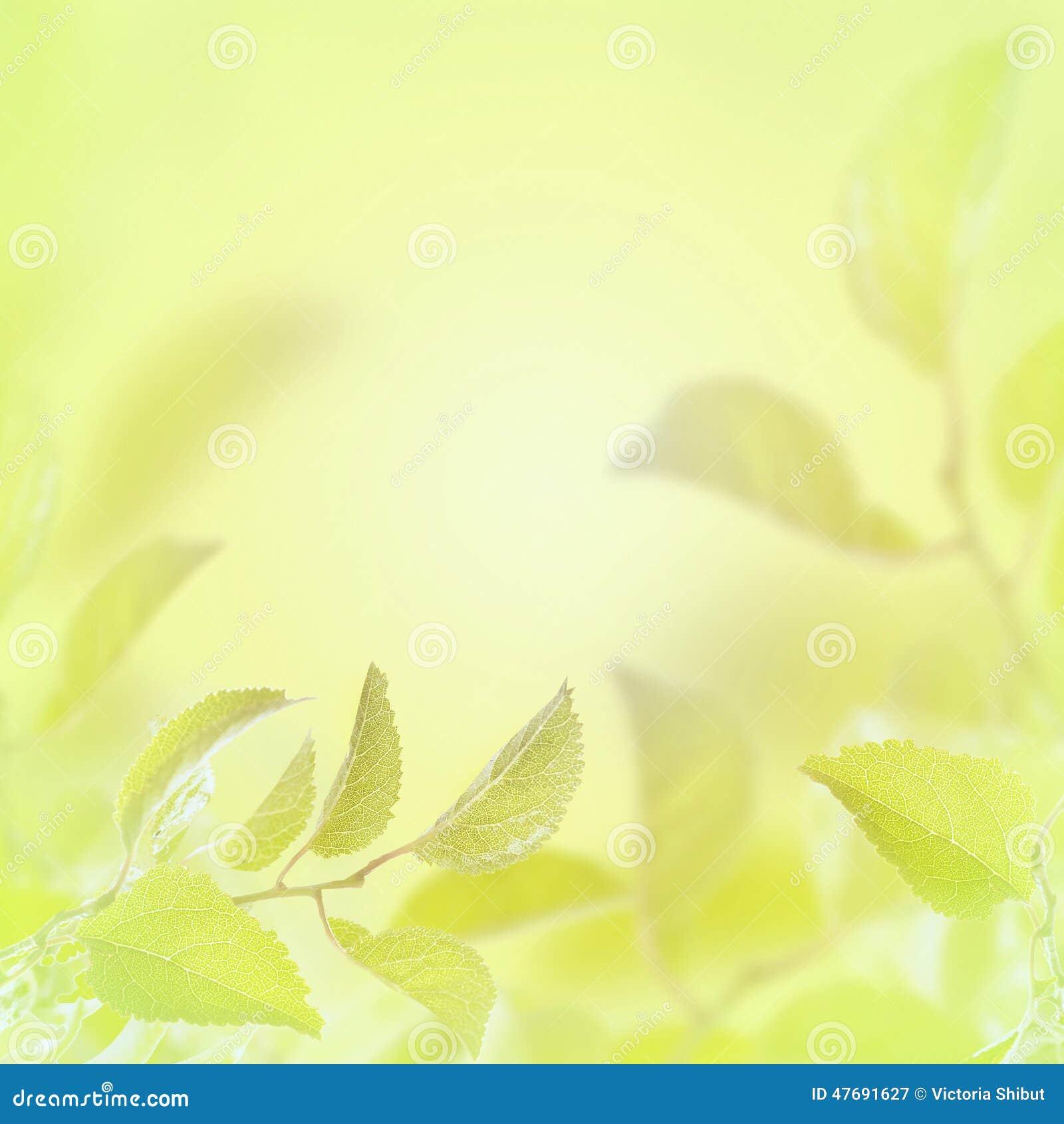 Abstrakter heller Frühlingssommerhintergrund mit Blättern