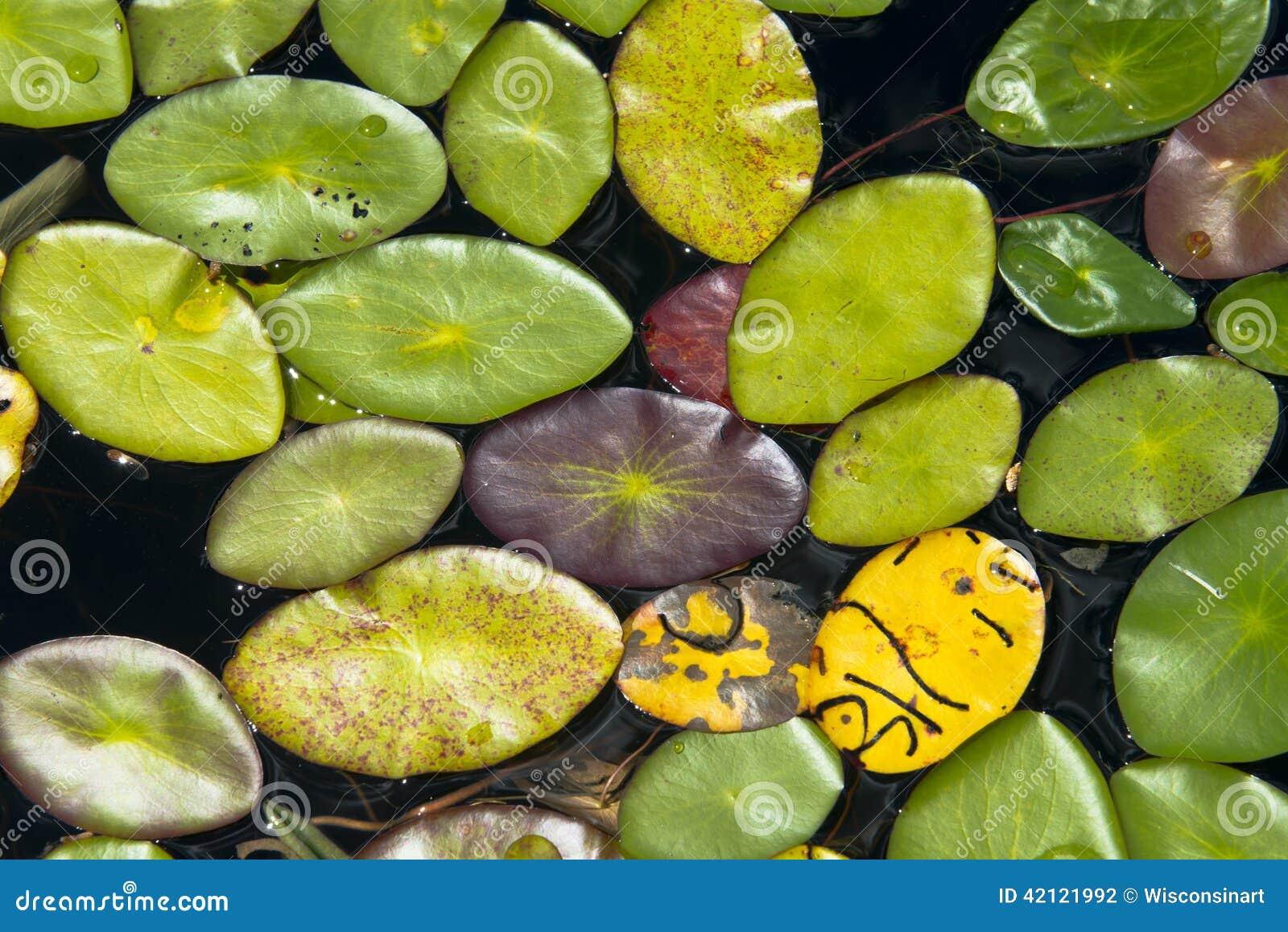 Abstrakter Hintergrund Lily Pads im See, Natur-Farben