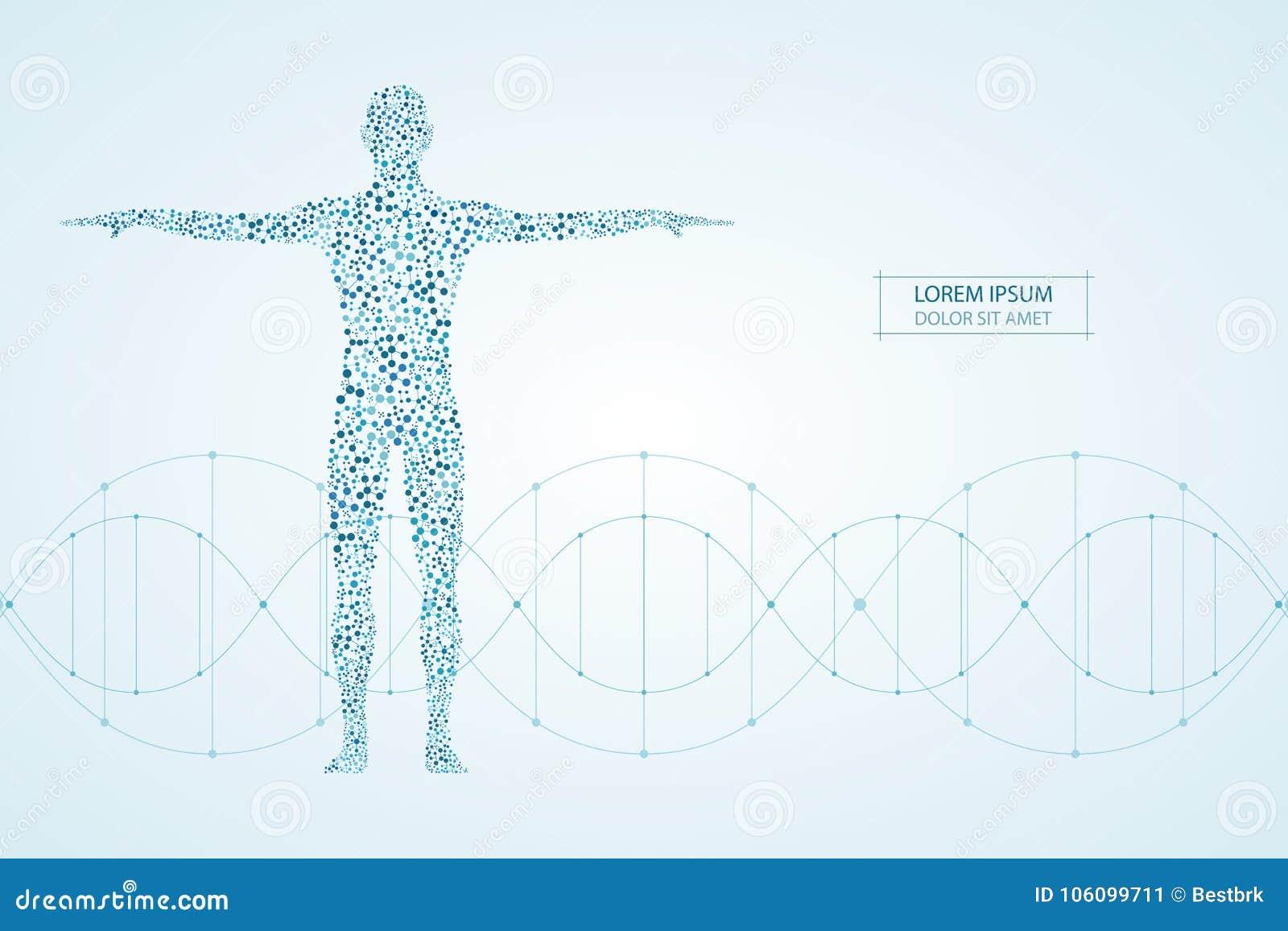 Abstrakter menschlicher Körper mit Moleküle DNA Medizin, Wissenschaft und Technik-Konzept Auch im corel abgehobenen Betrag