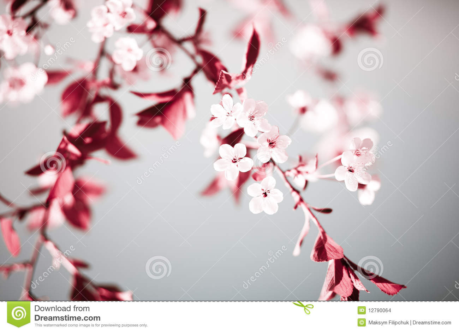 Abstrakter mit Blumenhintergrund des Frühlinges