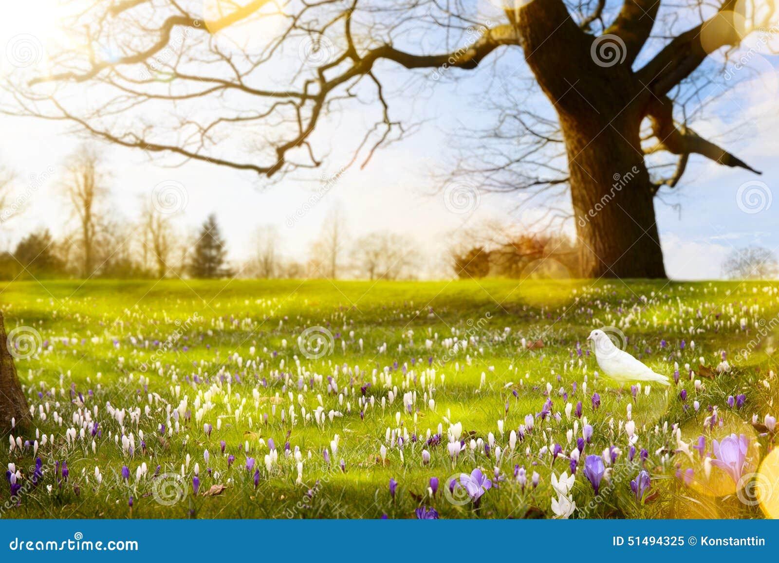 Abstrakter sonniger Frühlingshintergrund