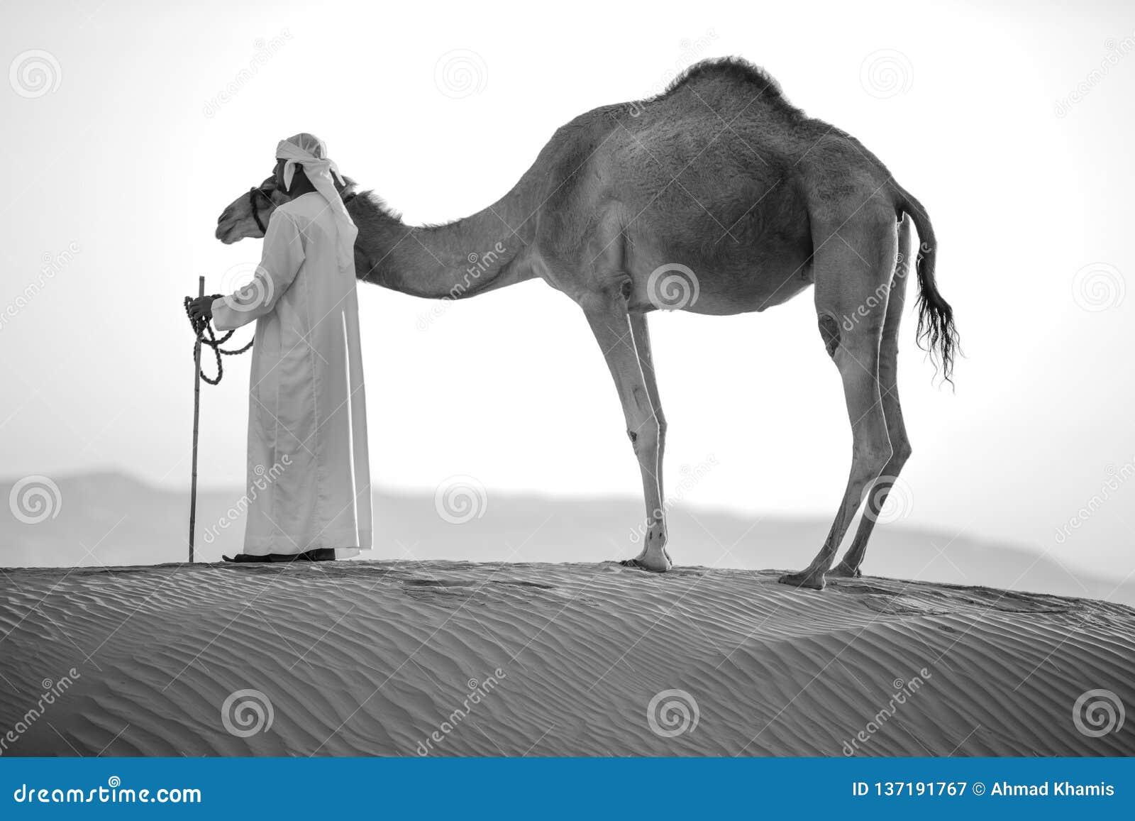 Abu Dhabi wielbłąda pustyni natura dzicy życie konwoje