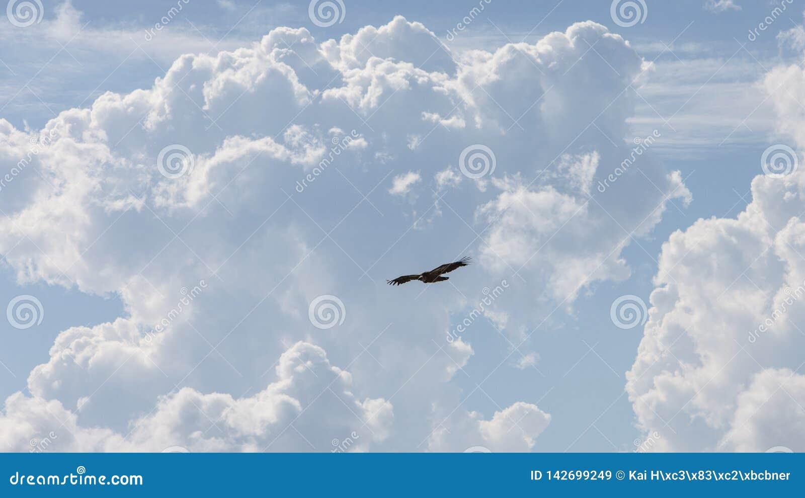 Abutre com as nuvens enormes do montão no dia ensolarado