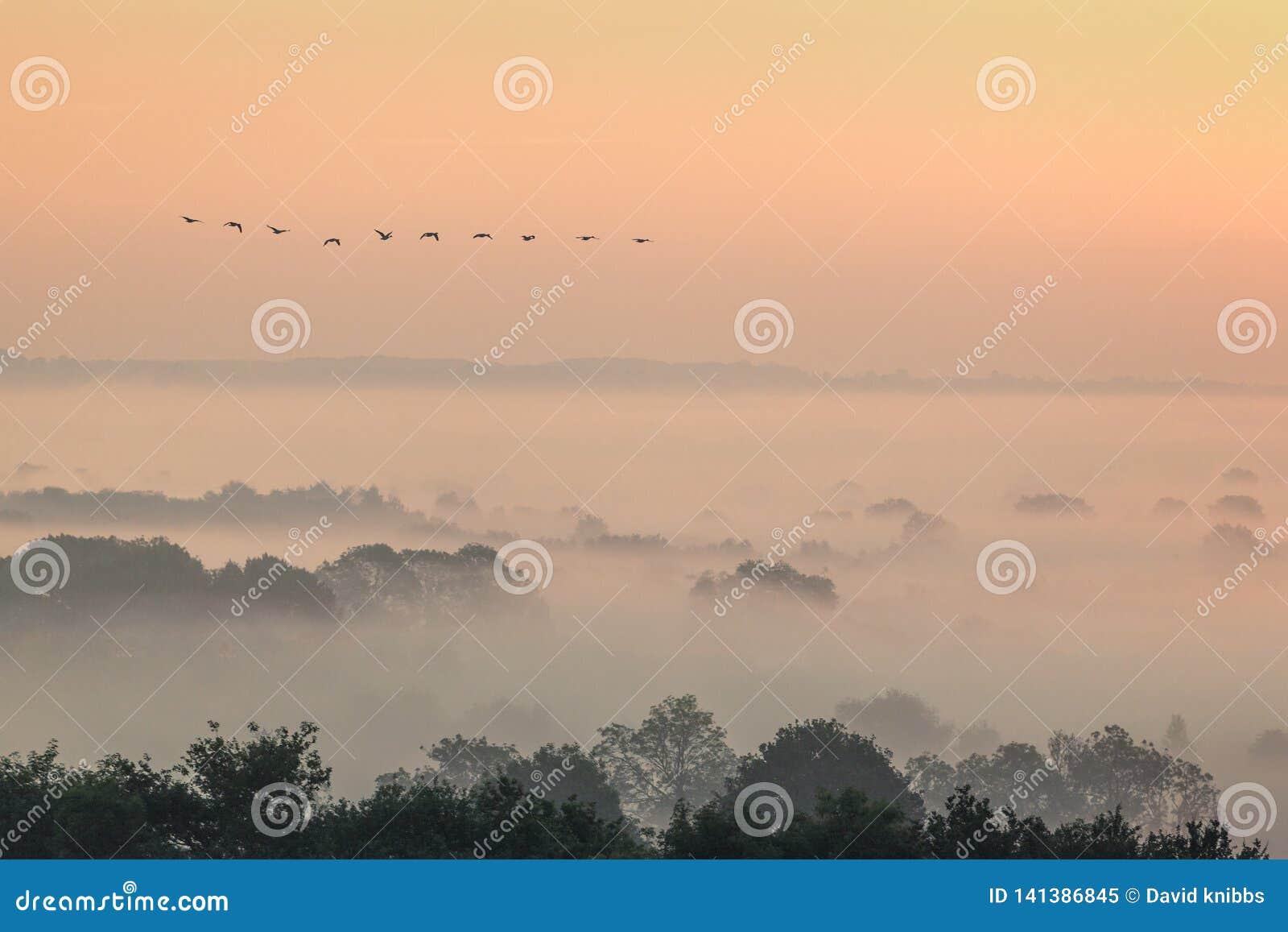 Abweichengansfliegen über einer nebelhaften Landschaft in Evesham Worcestershire