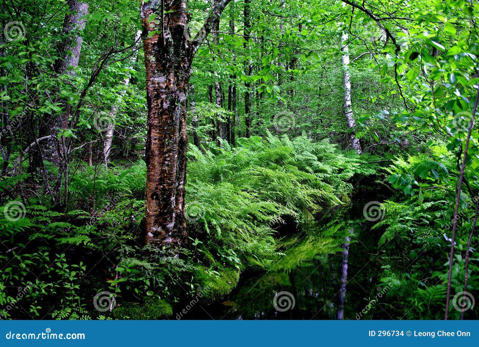 Acadia maine national park