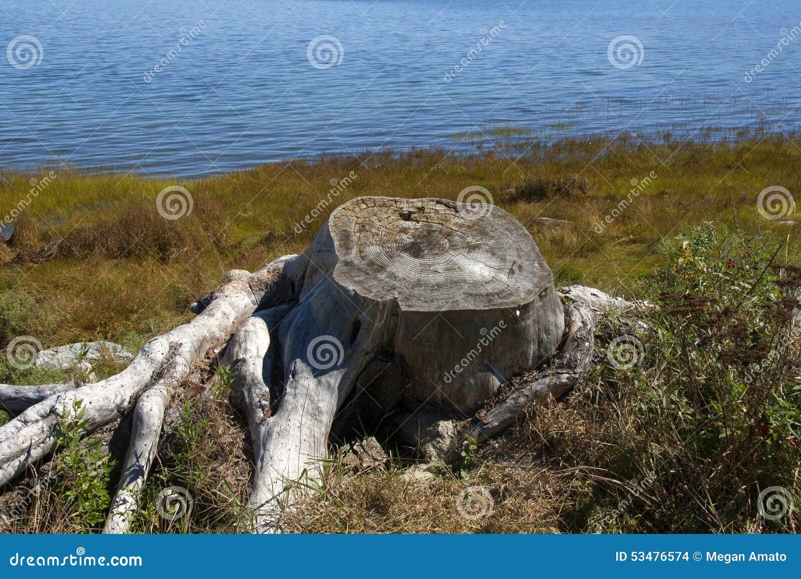 Acadia park narodowy 302