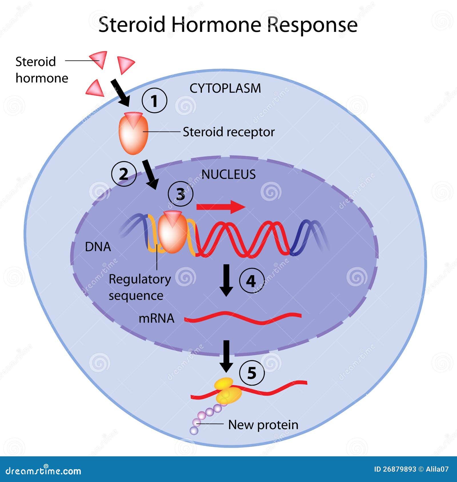 adrenal hormones steroids