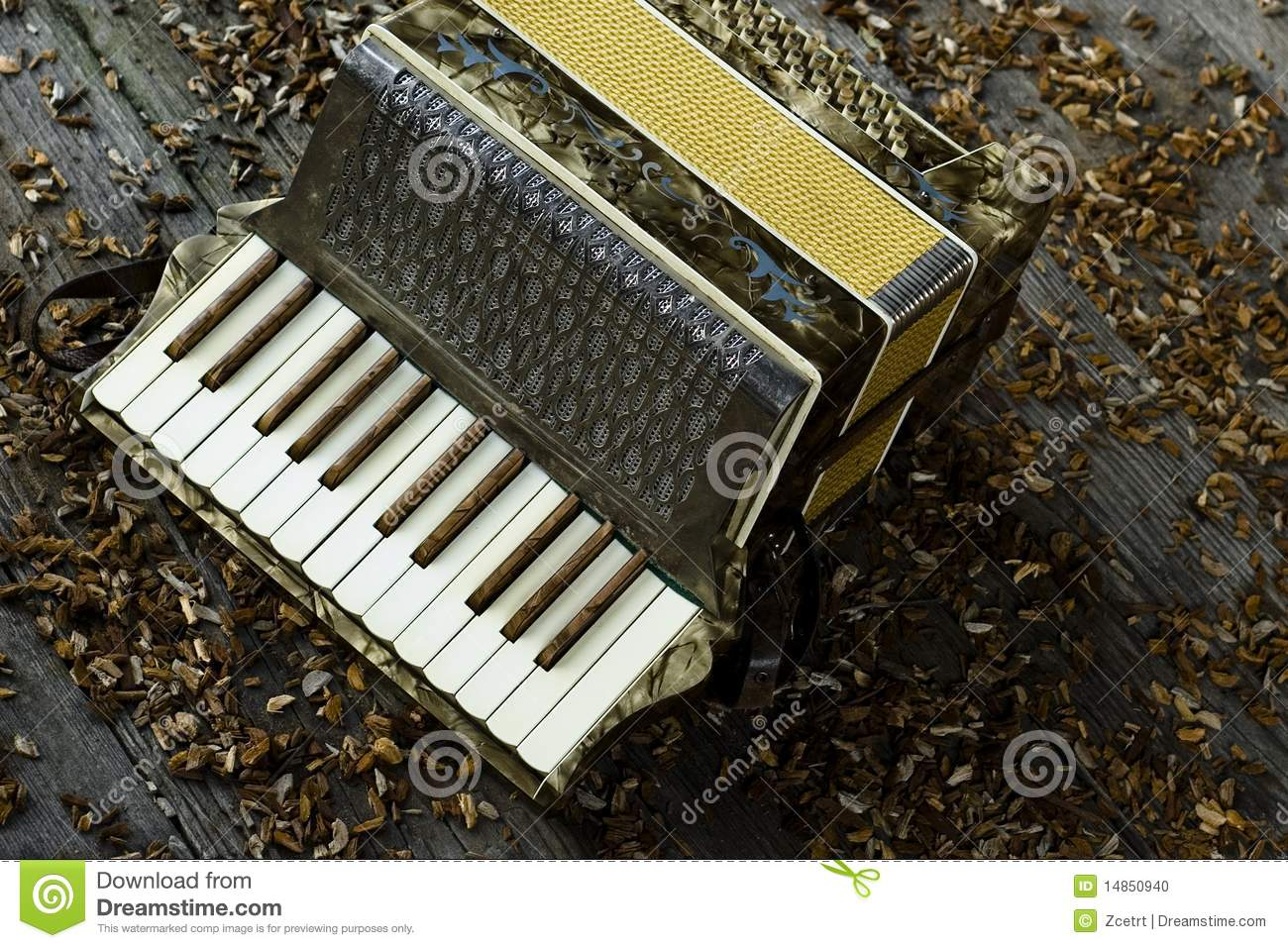 Accordion on wooden floor