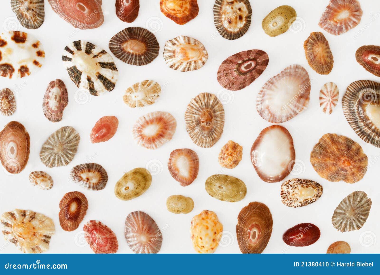 Accumulazione dei seashells