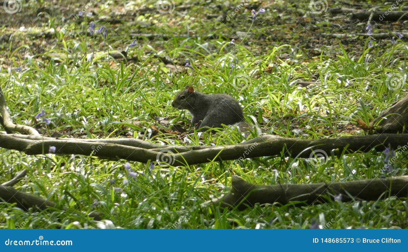 Accumulez le repos dans les jacinthes des bois une belle journ?e de printemps