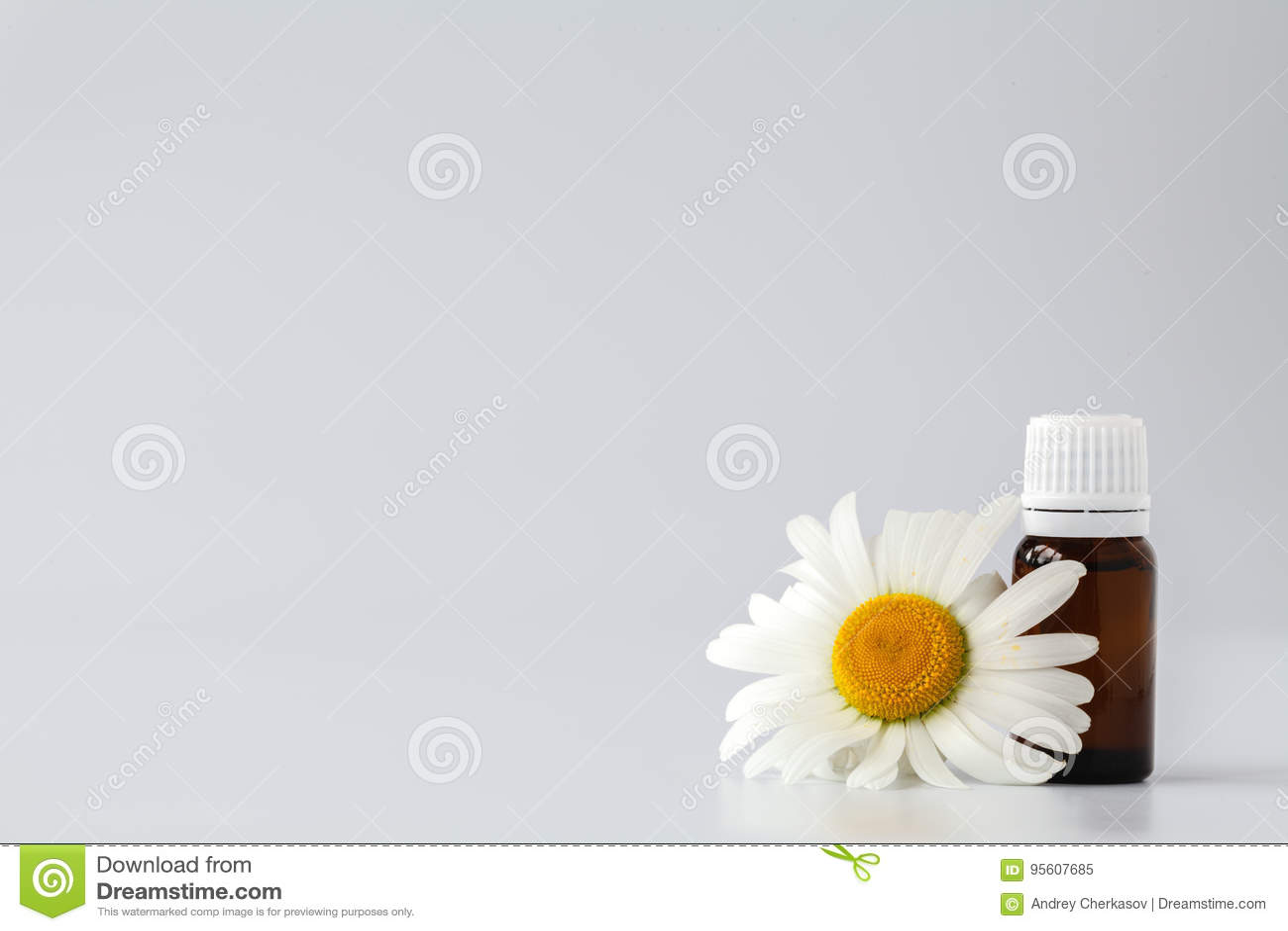 Aceite esencial del tinte de la manzanilla en botella cosmética Chamo fresco