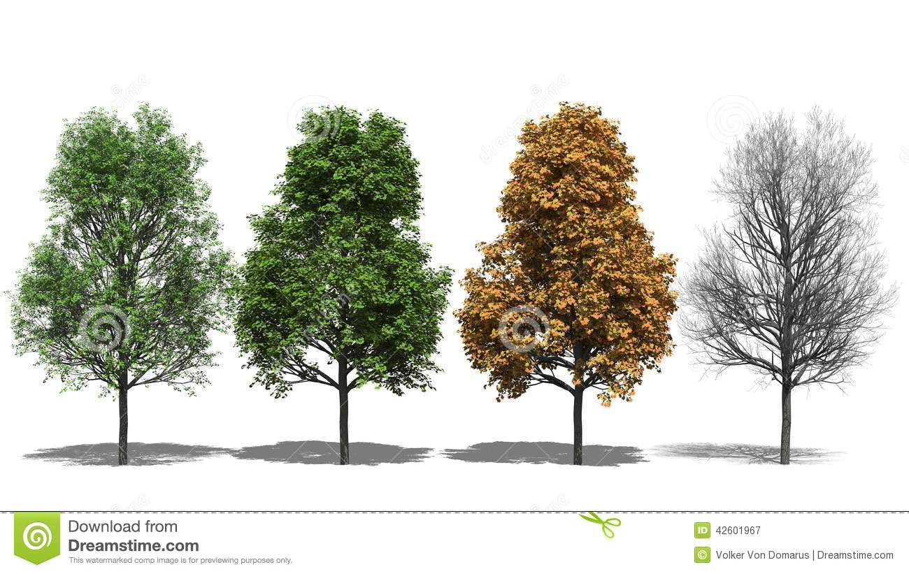 Acer Platanoides (Four Seasons) Stock Illustration - Image: 42601967