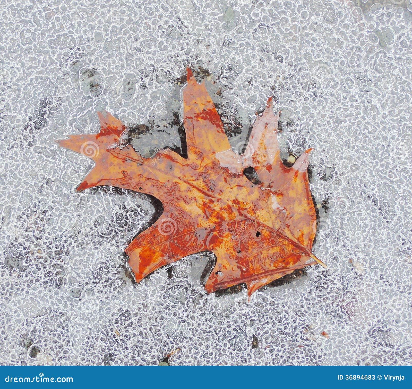 Download Acero congelato immagine stock. Immagine di bello, asciutto - 36894683