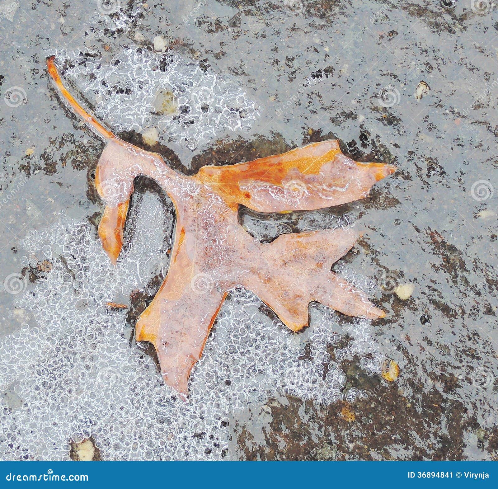 Download Acero congelato immagine stock. Immagine di autunno, particolare - 36894841