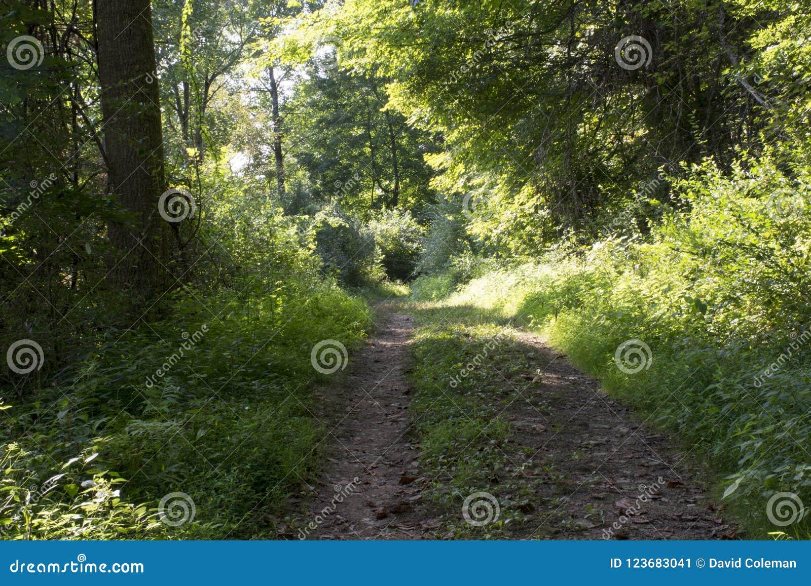 Acess droga w lesie