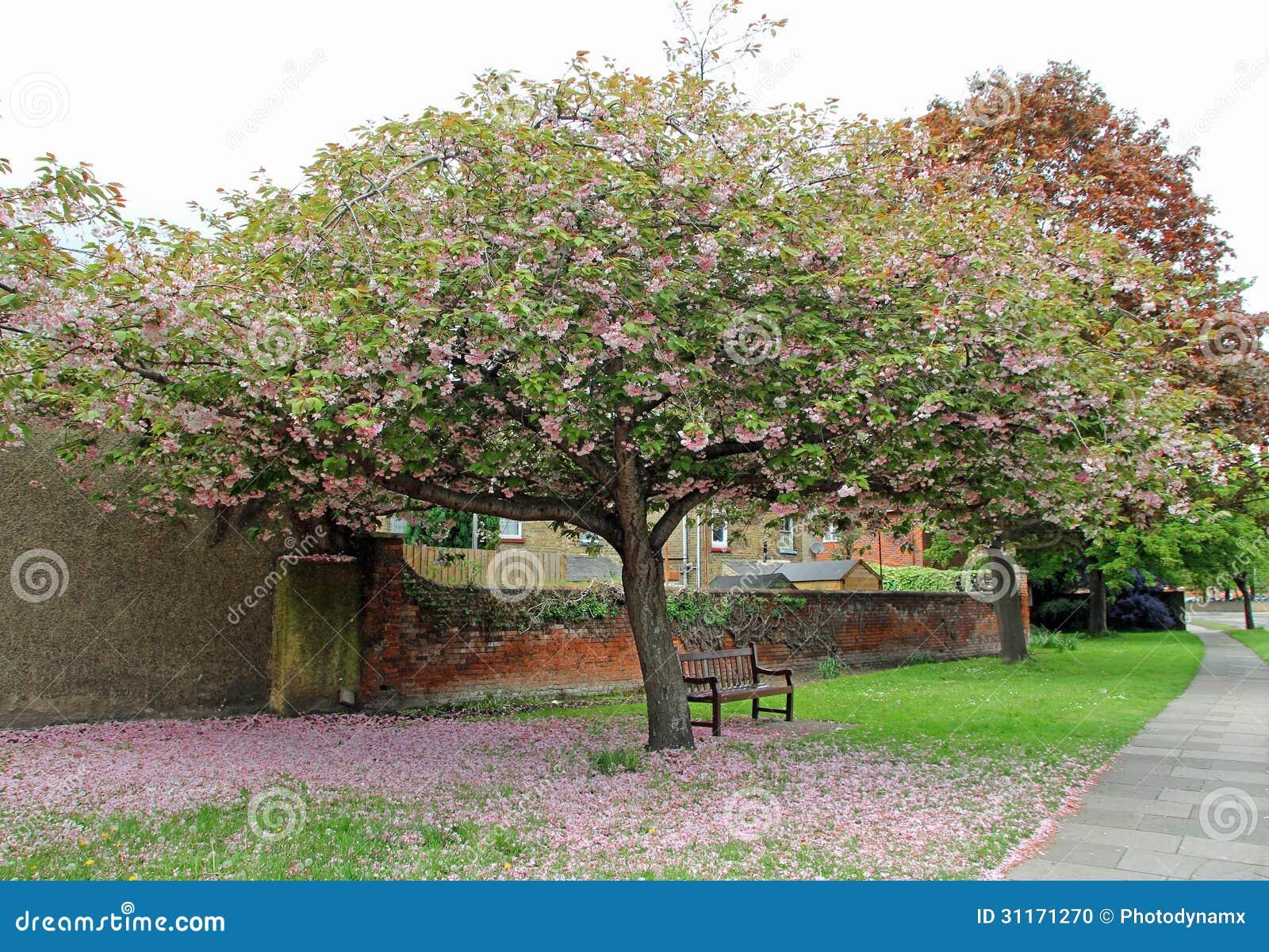 Achter tuin. de .behind de muur. .under een boom