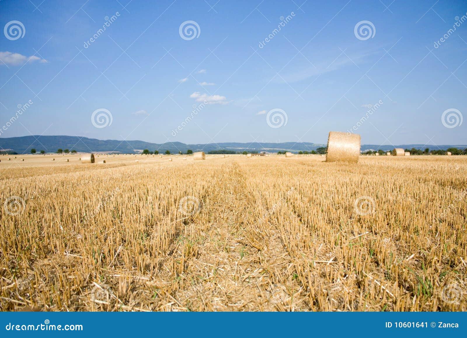 Achtergrond met cornfield