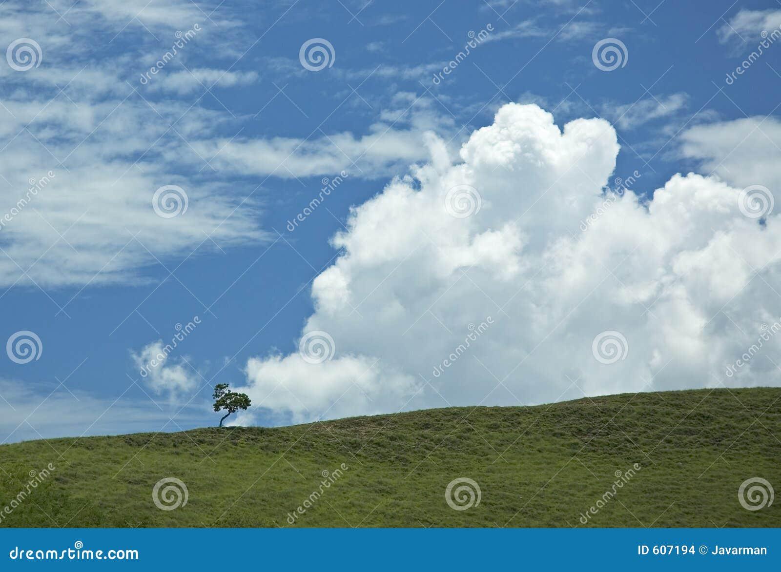 Achtergrond van blauwe hemel en groen gras