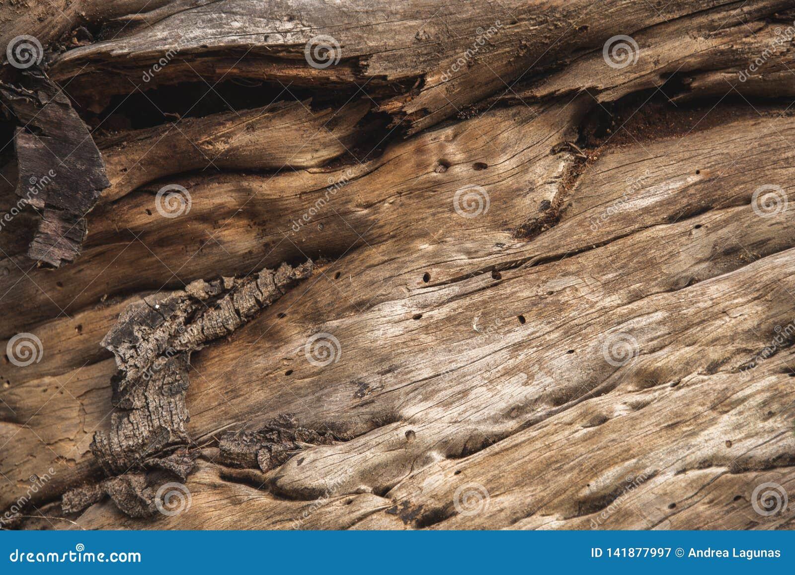 Achtergrond van een houten schors