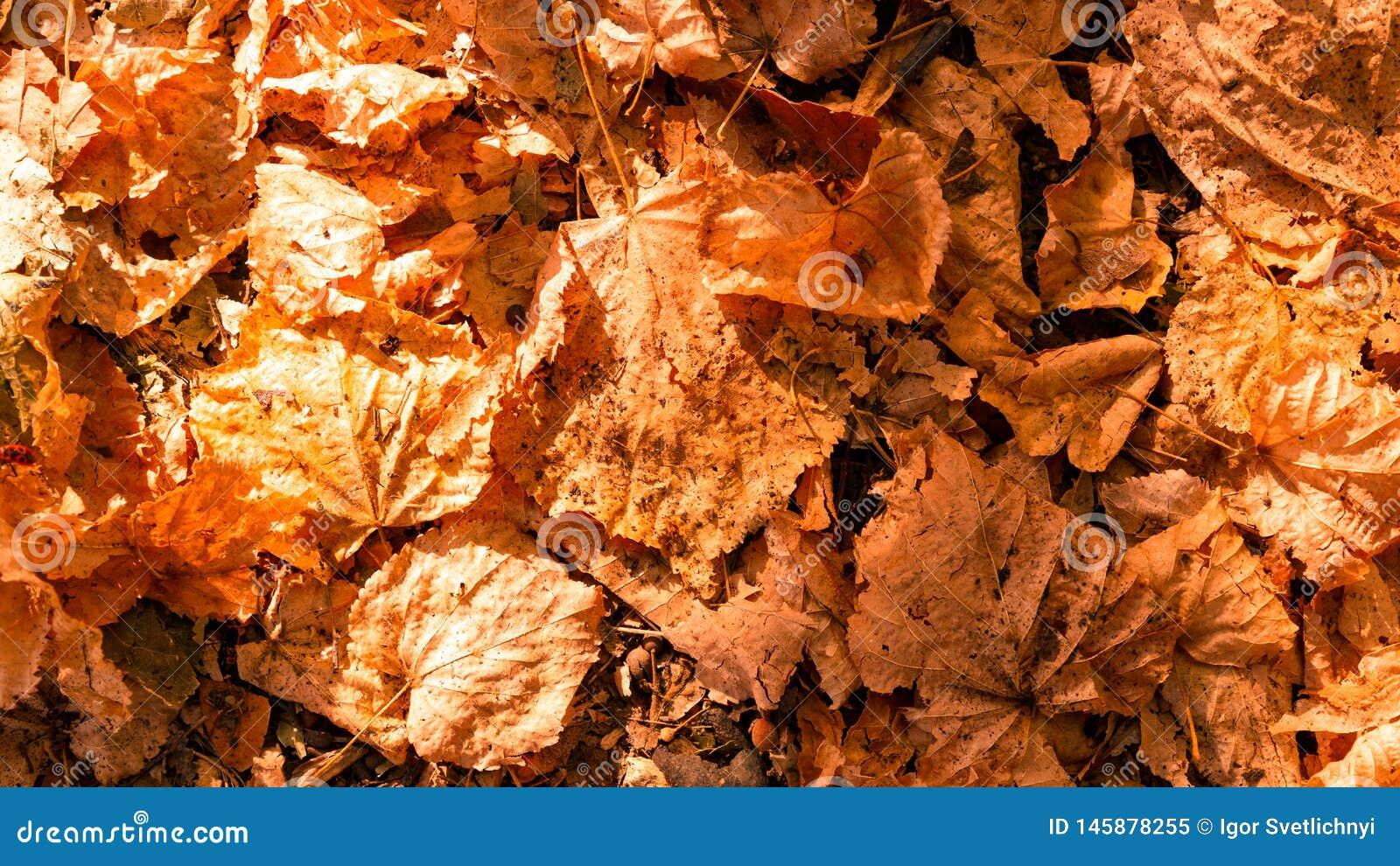 Achtergrond van kleurrijke de herfstbladeren