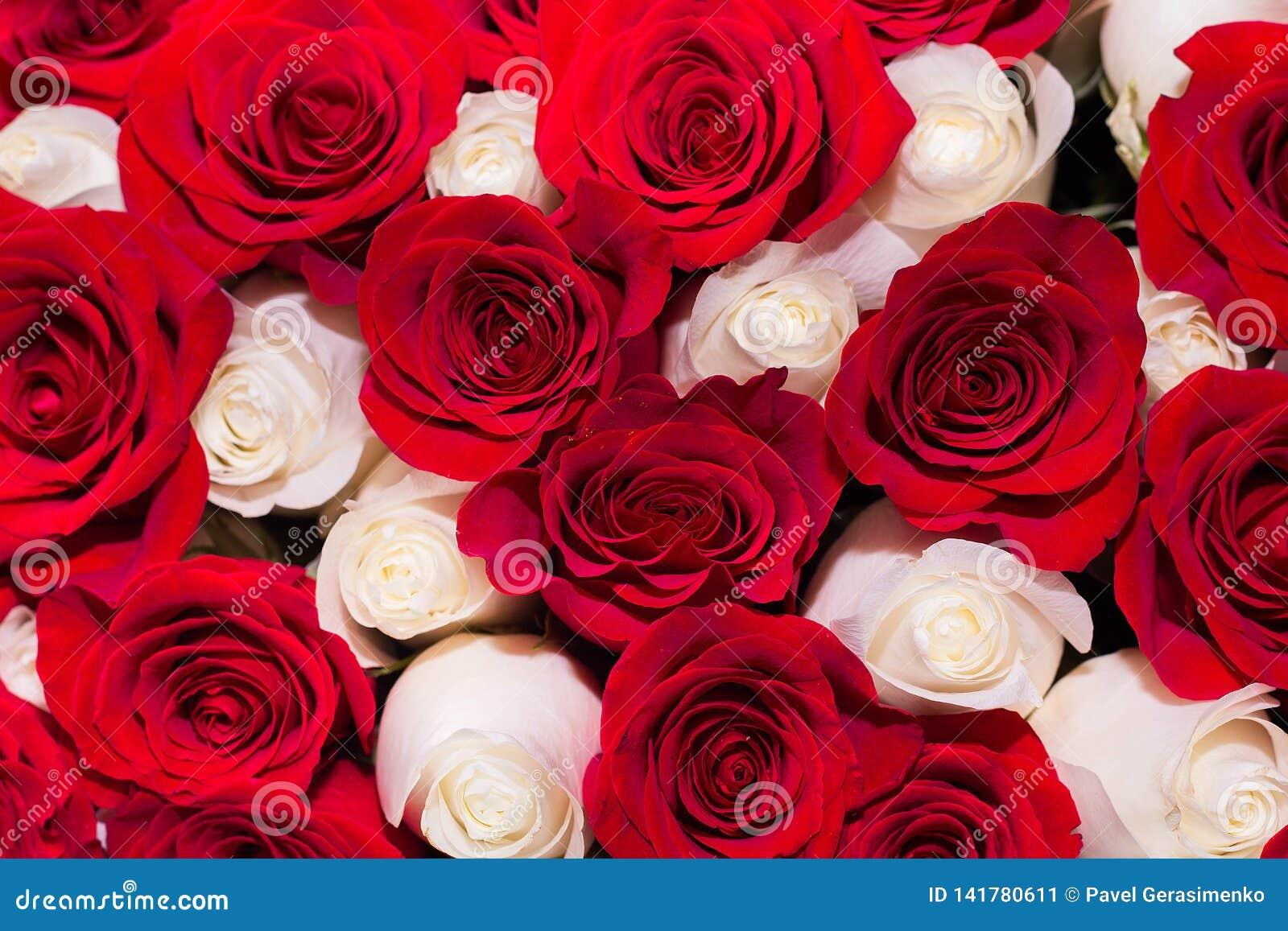 Achtergrond van rode en witte rozen