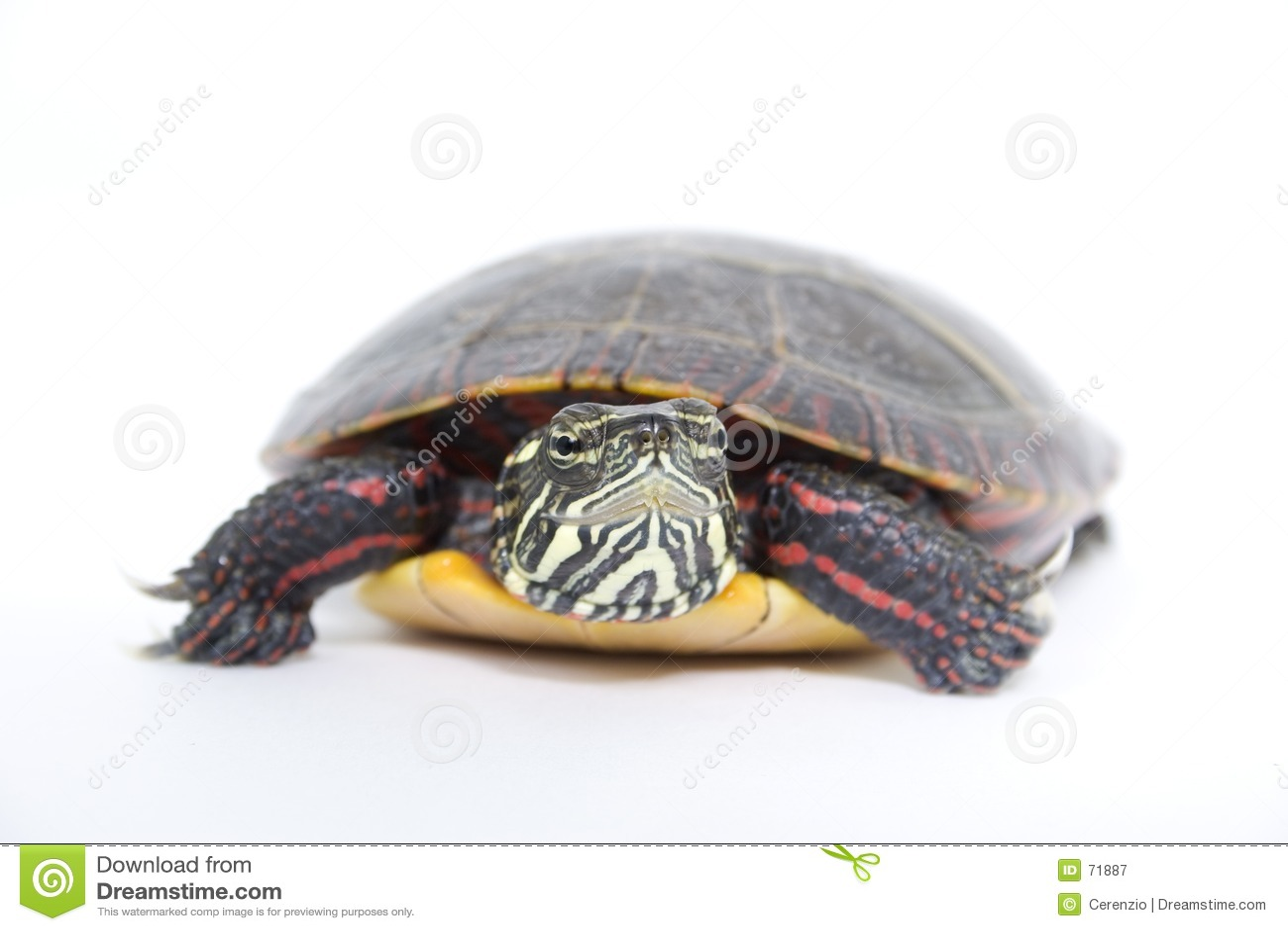 Acima do fim com tartaruga da água