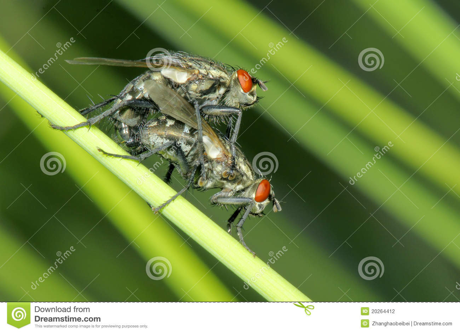 Acoplamiento de la mosca