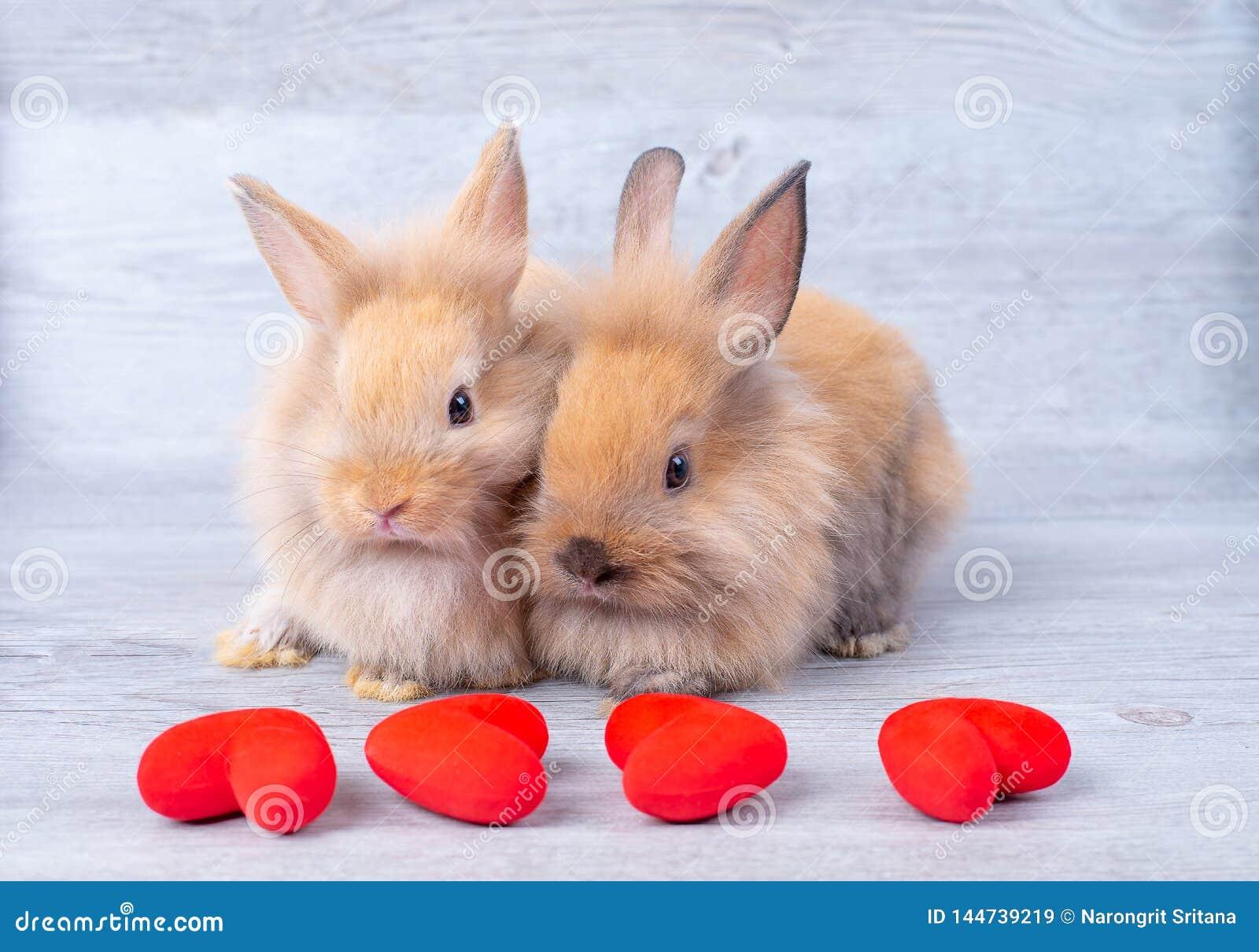 Acople a luz pequena - coelhos de coelho marrons no fundo cinzento no tema do Valentim com mini coração na frente deles