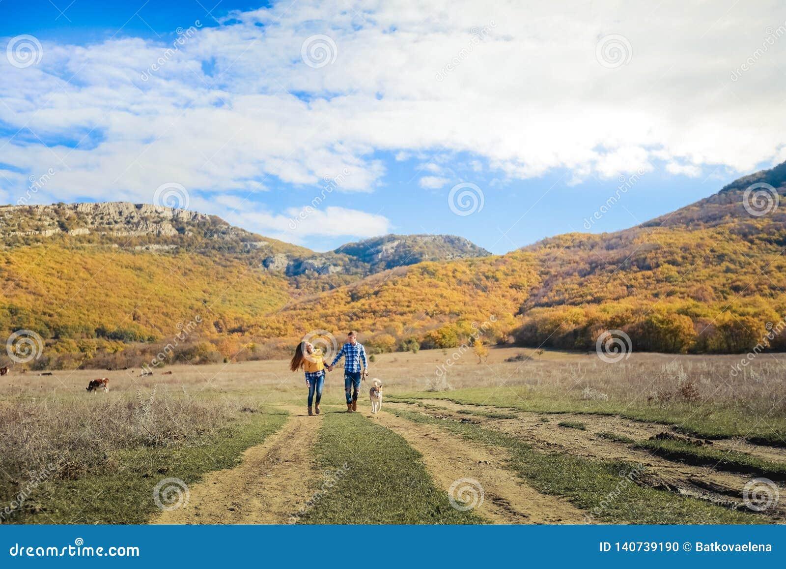 Acople o prado do campo do por do sol do outono do cão do perdigueiro da caminhada que guarda as mãos