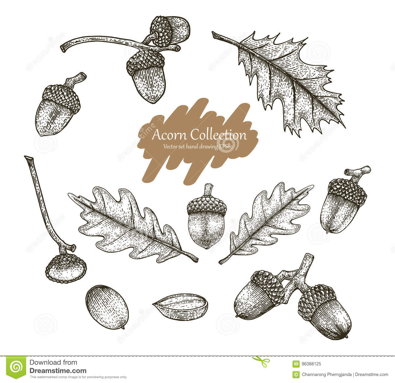 Acorn Collection Vector Set Hand Drawing Vintage Style Stock Vector ...